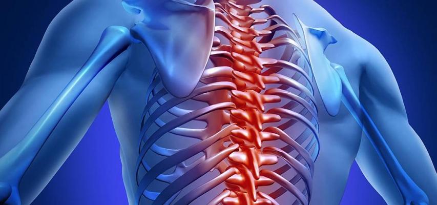 МРТ позвоночника, грудного отдела позвоночника
